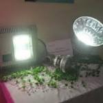 Đèn Chiếu sáng tiết kiệm điện